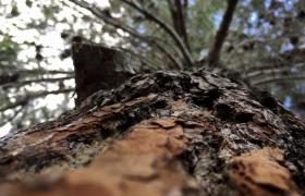 超清仰拍树干树梢唯美自然景色视频素材