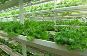 高清实拍种类丰富农业水果蔬菜海产品视频素材