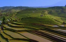 蔚为壮观的绿色梯田航拍视频素材下载