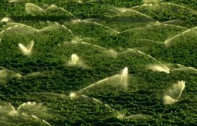 绿色农作物农田节水水利喷溉灌溉视频素材参考