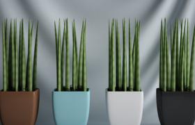 室內抗輻射多肉直立盆栽植物C4D模型