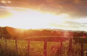 移动拍摄新西兰森林牧场周边风景视频素材参考