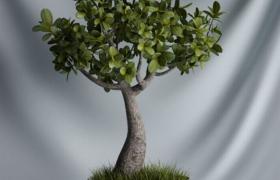盆栽树桩盆景室内植物景观c4d模型(含贴图)