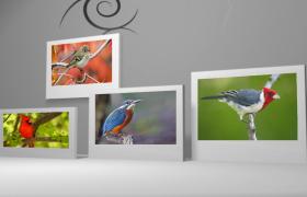 时尚立体背景修饰小鸟插图相册会声会影素材