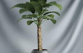室内大型景光植物盆栽艺术装饰品C4D模型展示