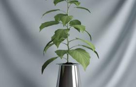 現代簡約藝術綠色健康植物盆栽景光C4D模型