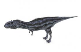 兽脚亚目虚骨龙类暴龙超科大盗龙类西雅茨龙C4D模型