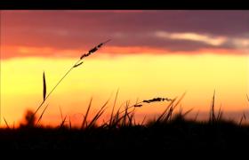 高清实拍田野傍晚间夕阳落下唯美视频素材下载