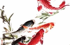 平面素材下载池塘鲤鱼唯美意境海报背景参考