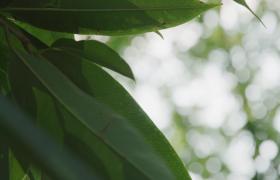 实拍清晨树林中阳光刺眼清新拍摄视频素材