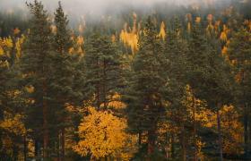 旋转航拍多彩茂密森林高清视频素材(mp4下载)
