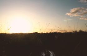 唯美实拍阳光下辽阔沙漠枯草丛美景视频素材