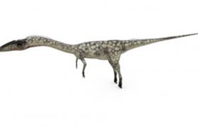C4D雙足恐龍模型:北美洲小型肉食性腔骨龍(含材質圖片)