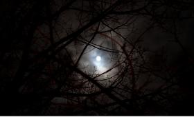 实拍漆黑夜晚透过干秃树枝观看月亮乌云变化高清视频素材