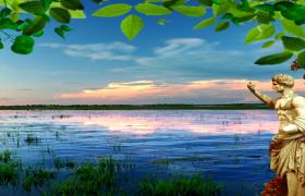 綠葉生長夕陽下湖光山色唯美湖水風景高清視頻素材