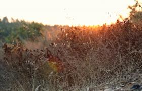 阳光洒在草丛上高清实拍视频素材