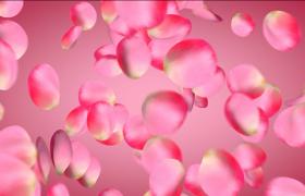 粉红色玫瑰花瓣特效结婚周年纪念日动态爱心装饰图文展示PR模板