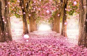 温暖浪漫花卉婚礼动态舞台动态背景婚庆素材视频下载