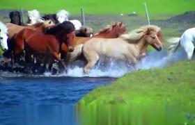 草原上挣断马鞅实拍成群骏马慢动作特效视频素材下载