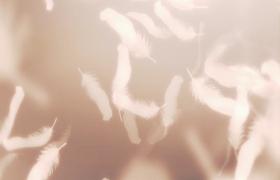 洁白羽毛梦幻般飘落HD唯美视频素材
