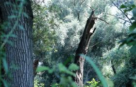葱翠的森林古树高清实拍自然风光视频素材