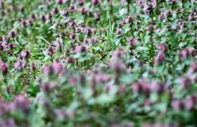 春天微风轻抚路边野花唯美大自然风景高清实拍特写视频素材
