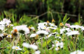 春天森林中野花漫山遍野高清实拍视频素材