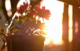 陽光下澆花動作唯美特寫HD實拍視頻素材