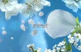 EDIUS6.54 白色鲜花边框花瓣舞动转场家庭生活图文展示模板