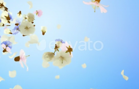 夏天情人节唯美花朵随风而吹掉落片头AE模板