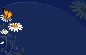 深藍色背景彩蝶雛菊上停歇MOV動態卡通視頻素材