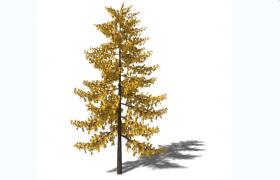 无患子亚目双子叶被子植物加拿大枫树绿色植物景观C4D模型(含贴图)