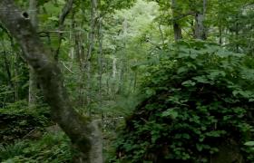 梦幻神秘青绿的森林高清实拍视频素材