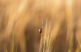 可爱的七星瓢虫昆虫系列幻灯片背景图片素材