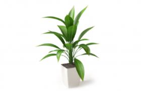 精致清新的室內造型盆栽綠色植物擺件C4D模型(含材質貼圖)