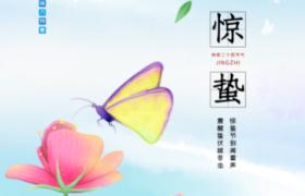 蝴蝶花朵梦幻春景插图传统惊蛰节气psd平面宣传海报