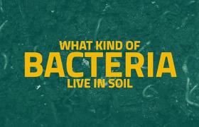 医学健康细胞细菌衍生物文字动画特效记录片AE模板