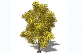 圣劳伦斯河沿岸夏季金色枫树大型无患子亚目落叶乔木C4D模型
