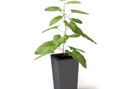 精品家居裝飾綠色植物擺件小型荷葉盆栽綠植Cinema4D模型