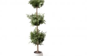 三截式園圃盆栽布景植物高大盆栽盆景C4D模型(含材質貼圖)