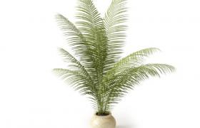 幼年鐵樹室內觀葉盆栽植物菲律賓蘇鐵C4D國外盆景植物模型