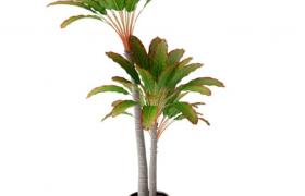 黑色雅致盆缽裝飾客廳綠葉盆景植物裝飾擺件C4D模型
