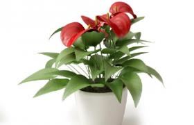 紅綠葉片交錯精品盆栽植物家居客廳綠植擺件Cinema4d模型(含材質貼圖)