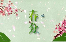 清新花枝文艺装饰粉色花瓣唯美飘零春分节气AE宣传模板