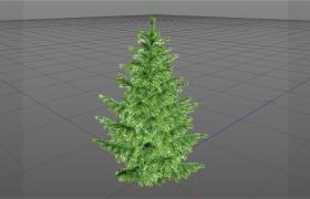 古老的綠色植被景觀樹挪威森林幼年云杉樹C4D模型