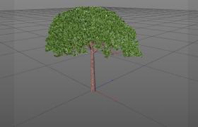 圓頂型松樹pinus pinea戶外植物樹木C4D模型(含材質)