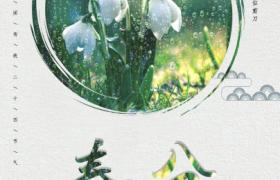 春雨白花唯美清新插圖Spring春分節氣宣傳海報