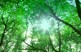 仰拍視角陽光穿透清新森林高清實拍視頻素材