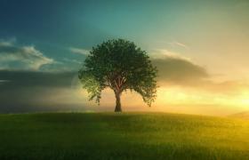 嫩芽生長成參天大樹全過程延時拍攝視頻素材