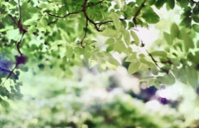 綠葉陽光自然春景實拍視頻素材